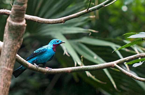 unknown turquoise-colored bird