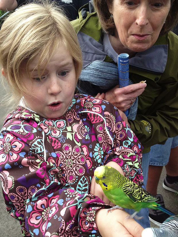 Surprised by a Budgie