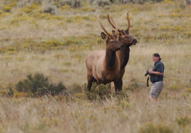 Photographer with Elk