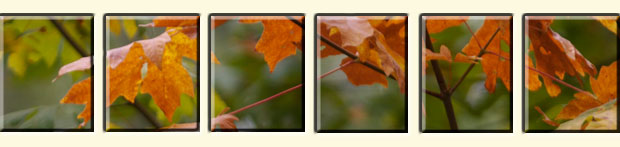 Fall Picture Tiles