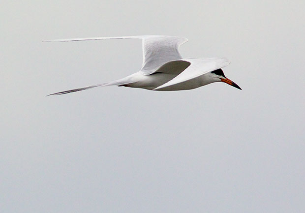 Franklin Tern