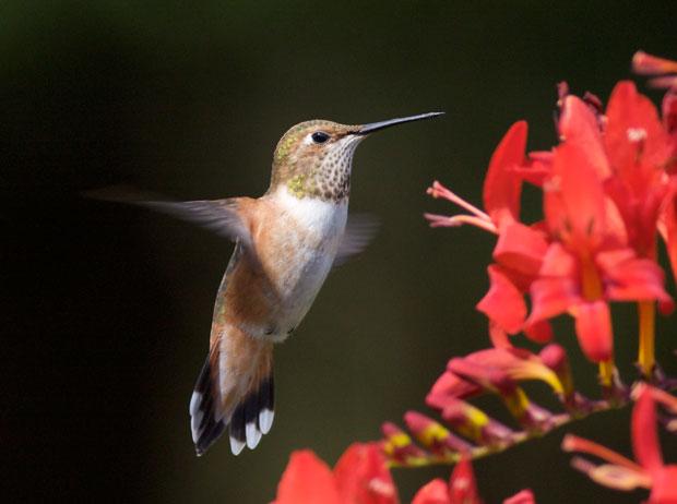 Essay song hummingbird