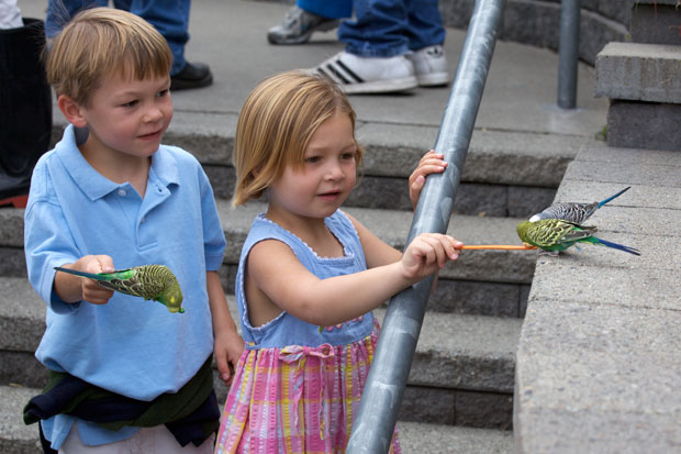 Logan and Zoe feeding budgie
