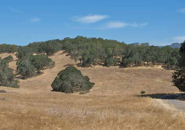 Santa Rosa Hillside with Oaks