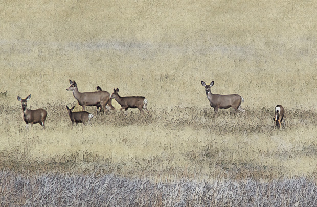 Herd of Deer on Grasslands