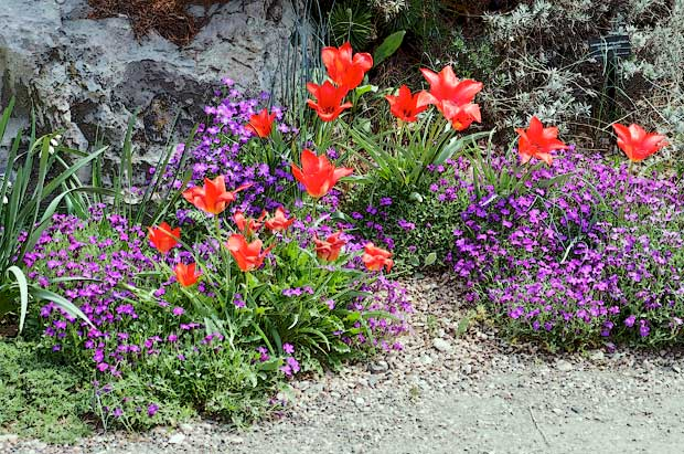 purple and red flowers