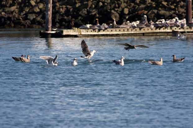 Sea Gulls Floating in Circle