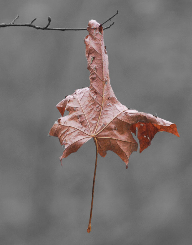 A Suspended Leaf